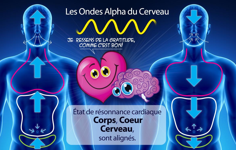 Coherance-cardiaque-alpha