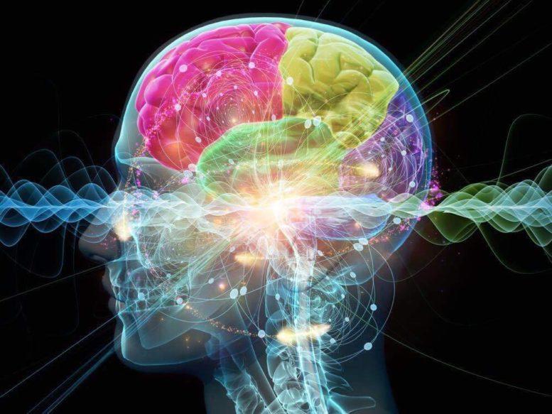 cerveau-santé-bonheur